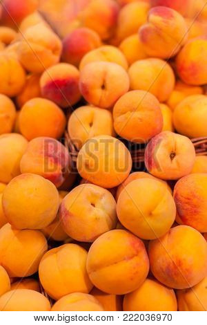 Organic Ripe apricots fruit  in the market.  Apricots harvest.  Food background