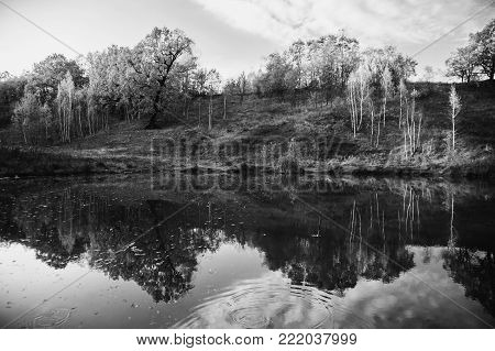 Trees with the warm light of the setting sun. Black and white art monochrome photography. Black and white creative photography. Black and white conceptual image. Beautiful black and white background.
