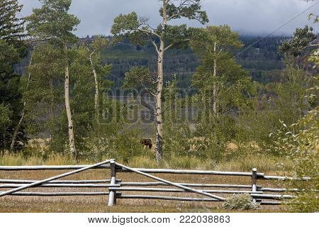snow on wood rail fence in meadow on Wyoming ranch, aspens