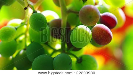 A Bunch Of Green And Red Grapes