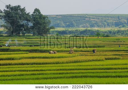 Sapa, Vietnam - Sep 20, 2013. People working on rice field at summer day in Sapa, Northern Vietnam. Sa Pa is a town in northwest Vietnam not far from the Chinese border.