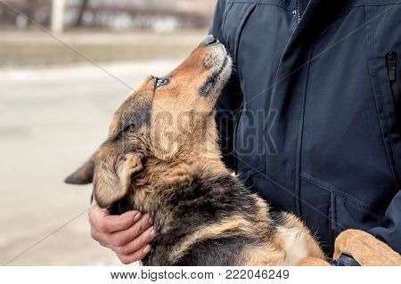 a man supports a dog that has become a hind paw, which shows loyalty and devotion