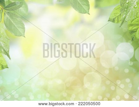 Green leaves frame color background elegance vitality