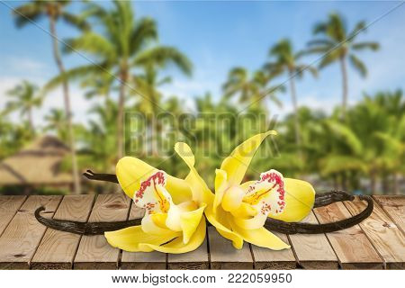 Flowers pod vanilla pods table yellow background