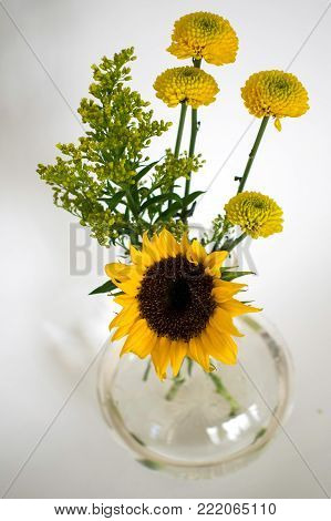 A glass vase holds one bright yellow sunflower and some other tall yellow flowers on white background.