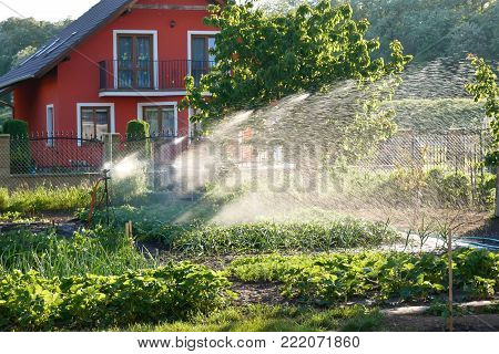 Watering of Vegetables in the Family Garden.