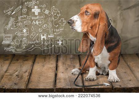 Dog hound basset basset hound background small shot