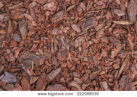 Pine mulch (small wood chips) is used to cover the soil in the garden.