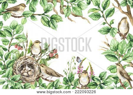 Watercolor painting. Horizontal rectangle frame with hand drawn songbirds, tree branches, nest, leaves, berries, flowers. Floral decorative background with plants, forest birds and space for text.