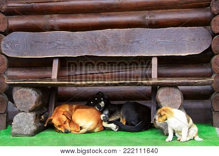 three dogs under the bench. Amusing dogs living next door. Our neighbours