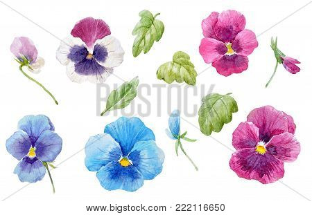 Beautiful set with watercolor hand drawn pansy flowers