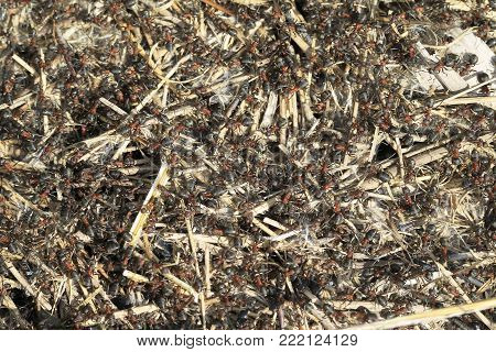 Large Anthill, Top View, Many Ants. Background Of Red Ant Colony.