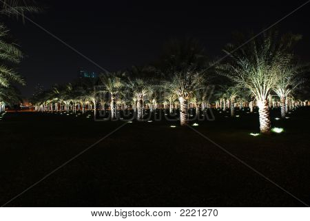 Palm Trees In Sharjah City