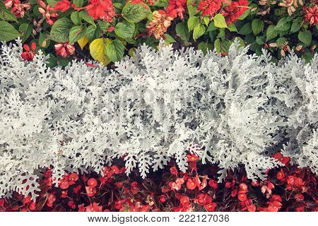 tri-color background of fresh flowers in harmonious color combination with white middle