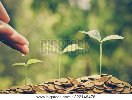 Hand watering trees growing on coins with natural green background / Sustainability of Business with csr practice