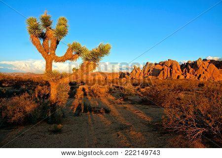 Desert Landscape Of Joshua Tree National Park At Dusk, California, Usa