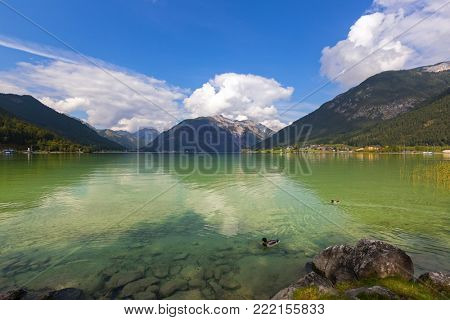 Male mallards swimming in crystal clear lake water of Achensee lake in blue green shade of fresh Turquoise water, northern part of Achen Lake during Autumn in Tyrol, Austria, Europe