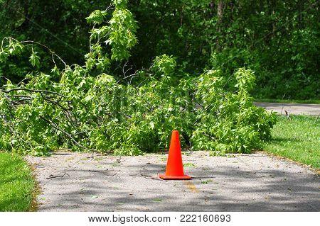 Orange Cone marks storm damaged trees fallen over a bike path