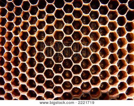 Honey Bee Comb