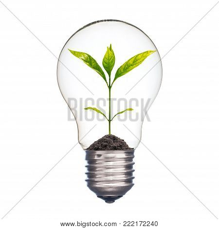 A photo of small plant in a lightbulb on isolate white background with clipping path, Ecology concept