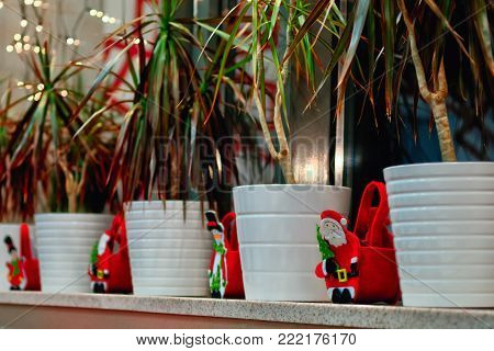 Indoor tropical houseplants in the New Year's decorations.