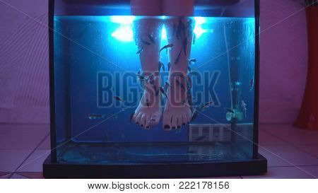 Legs of young girl in an aquarium with fish - special healing therapy