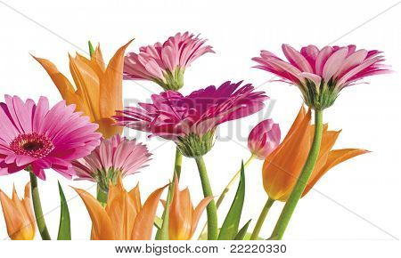 Flowers in spring with white background