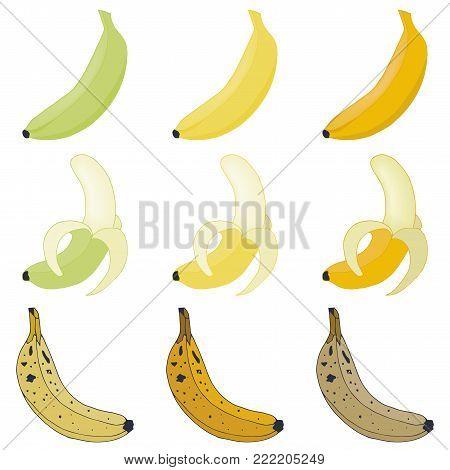 Vector set bananas. Overripe and peeled fruit
