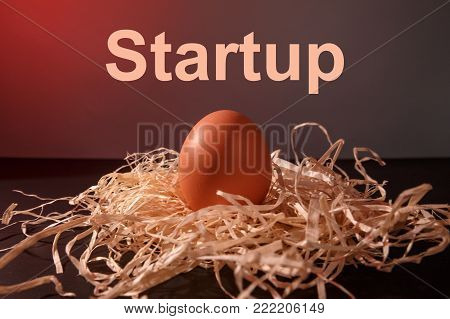 Concert business startup incubator and ideas. The egg lies in the straw on the desk close up.