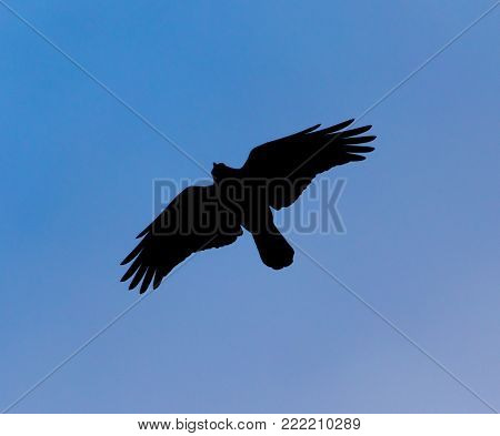 Silhouette of a black raven against a blue sky .