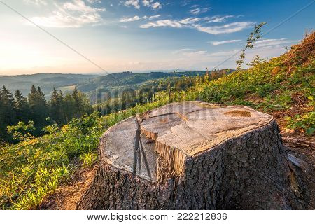 Afforested landscape, a tree stump of cut-out spruce on a grassy meadow in foreground.
