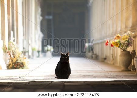 BOLOGNA,ITALY-DECEMBER 12,2016:black cat inside the monumental cemetery of the Certosa di Bologna during a sunny day.