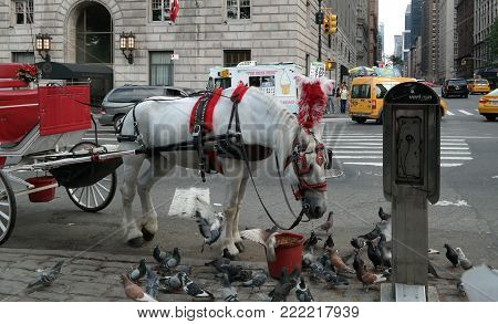 New York City, NY, USA 05.28.2016 red and white carriage with carriage horse sharing food with birds near Central Park, Manhattan