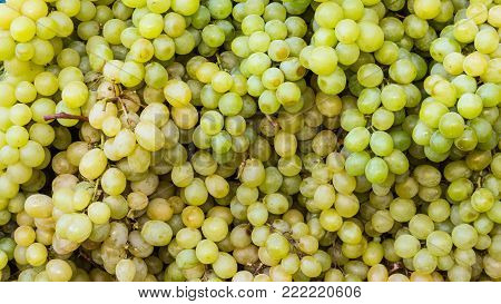 healthy fruits white green wine grapes at the market in wooden box. Grapes wine grapes bunch of grapes in the wooden box ready to eat sunny day outside