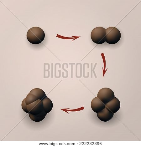 Set the zygote human vector illustration. 3D image reproductive stage.