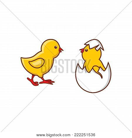 vector flat cute baby chicken, yellow small chick hatching from egg set. Flat bird animal, isolated illustration on a white background, poultry, farm organic food products advertising design object.