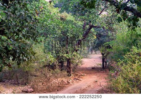 Scenic view of road leading through deciduous forest in Ranthambore national park, India. Selective focus. Zone 1