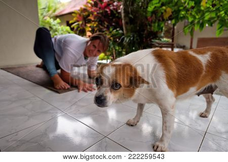 Caucasian woman doing yoga on terrace during summer vacation and her dog interrupt her and looking guilty at camera