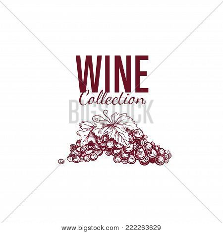 Wine shop label, cover. Vector hand drawn illustration. Sketch style