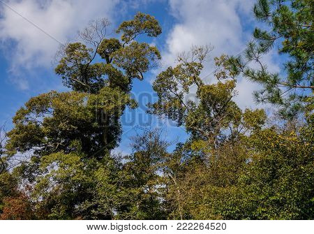 Green tree forest under blue sky in summer day.