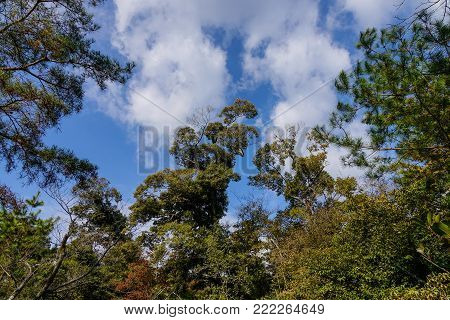 Green trees at forest under blue sky in summer day.