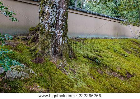 Japanese Zen Garden In Kyoto, Japan