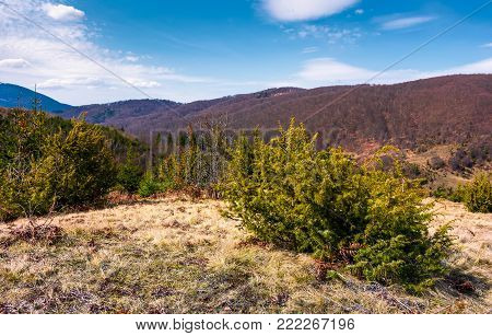 small plants on hillside with weathered grass. lovely springtime landscape in mountainous area