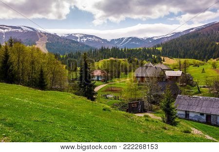 Podobovets village on grassy and forested hills. beautiful rural landscape at the foot of the Borzhava mountain ridge in springtime