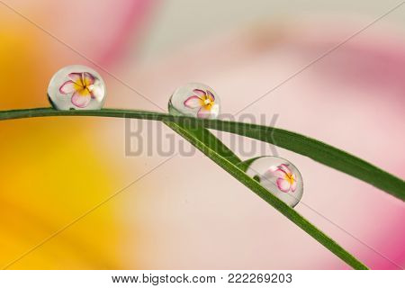 refracting photography, the big flowers refracting in the water drops