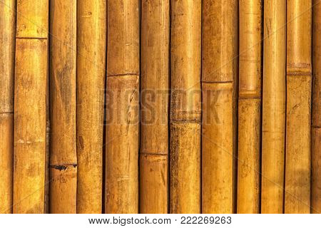 this is a real bamboo wood texture taken on location