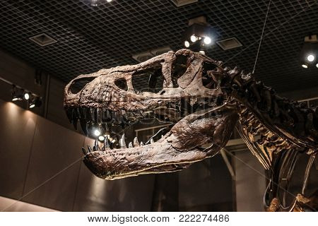 Tokyo, Japan - April 29 2017, Tyrannosaurus Rex (T rex) skeleton fossil at National Museum of Nature and Science Tokyo, Tyrannosaurus is a large carnivore dinosaur that lived in the late Cretaceous