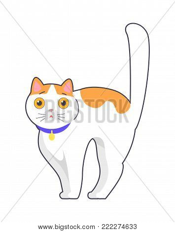 Cute cat with big eyes in blue collar on neck, fluffy feline animal with bend back vector isolated on white background, pussy kitten in flat style