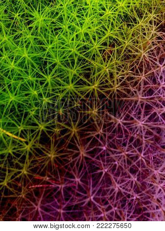 The colourfull grass, the ideal for background