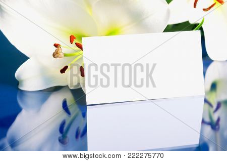 Flower spring background. Lily spring flower, Lilium Navona, with blank card, spring composition with lily flower. Closeup of lily flower, flower spring background with copy space. Spring flower still life